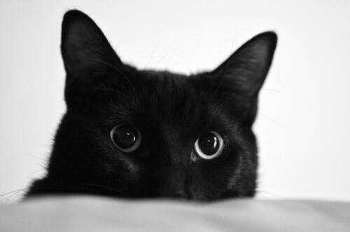 Zenzero's eyes